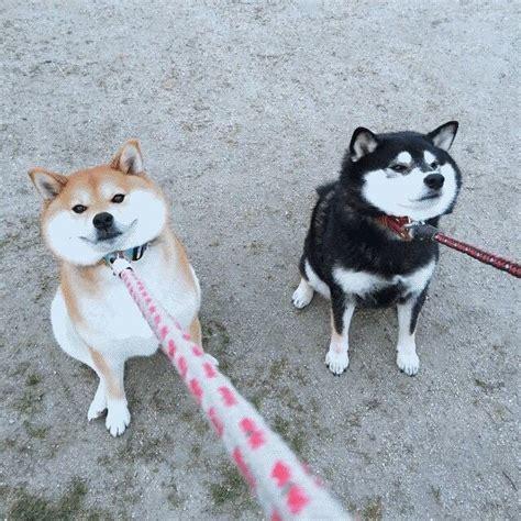 HODL : dogecoin