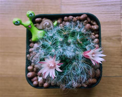 #cactus #แคคตัส #กระบองเพชร