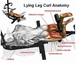Lying Leg Curl - Peak Fat Loss and Fitness