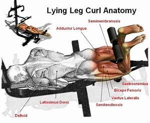 Lying Leg Curl - Peak Fat Loss and Fitness