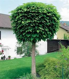 Kleine Bäume Für Vorgarten : bild kugel trompetenbaum seite familienheim ~ Michelbontemps.com Haus und Dekorationen