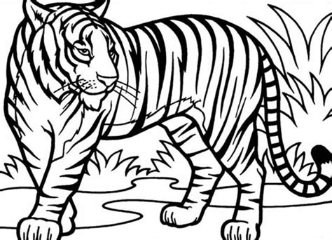 Free Coloring Pages Of To Draw Tiger 9185