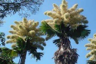 A Natureza e Deus: A Palmeira e o Cedro