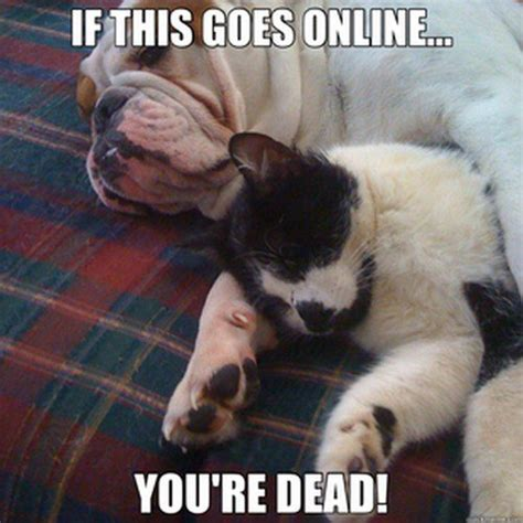 Dog And Cat Memes - 25 cat friendly dogs