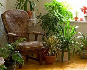 Houseplant, Air, Purifiers