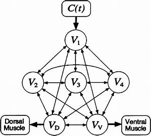 Neural Network Model Of The Chemotaxis Control Circuit Of