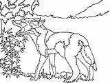 Coyote Coloring Pages Coyotes Howling Printable Drawing Head Runner Road Wiley Getdrawings Photobucket Template 71kb 630px sketch template