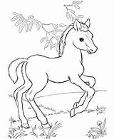 Coloring Pages Horse Horses Colouring Printable Foal Cute Pony Foals Baby Animals Colt Animal Ponies Wild sketch template
