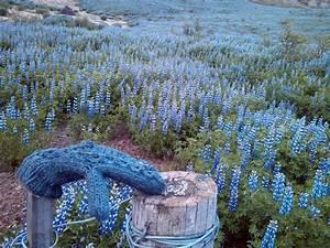 Blumen Im Sommer : die beste reisezeit f r island ~ Whattoseeinmadrid.com Haus und Dekorationen