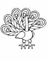 Peacock Coloring Cartoon Pages Easy Imagery Drawing Colouring Baby Simple Getdrawings Printables Children sketch template