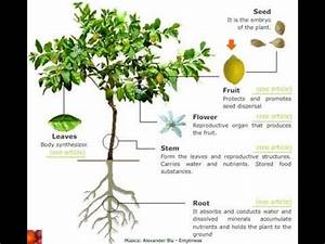 What is the Meaning of plant in Hindi - DriverLayer Search ...