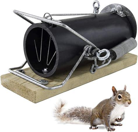 Best Squirrel Trap 2021 | TOP 15 Squirrel Traps