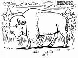 Bison Realistic Coloring Pages Animals Animal Buffalo Water Printable Grassland Farm Extinct American Gun Prairie Getcolorings Getcoloringpages Face Popular Able sketch template