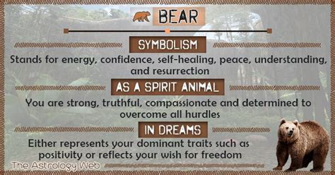 bear meaning  symbolism bear spirit animal bear