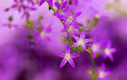 Purple Pretty Wallpapers Blooming Nice Nature Flowers