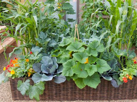 Container And Smallspace Gardening Diy