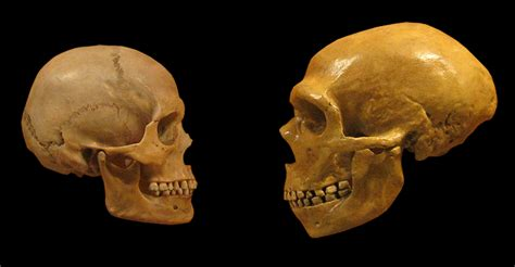 sapiens modern humans evolution may deleted neanderthal dna isu semasa semasa forum cari infonet