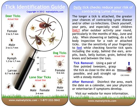 warmer weather  finally      ticks   family protected