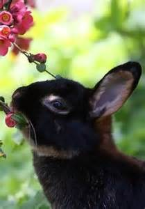Bunny Rabbit Smelling Flowers