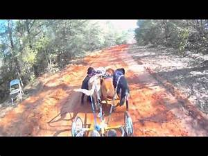 Driving Dogs at Flat Creek - YouTube
