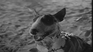 'Frankenweenie' (1984) - Frankenweenie Image (29575161 ...