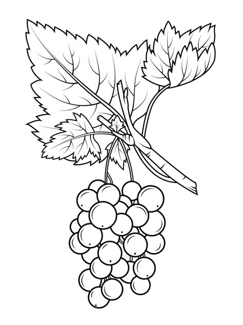 grapes coloring pages  coloring pages  kids