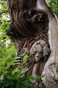 Tree Spirit Faces