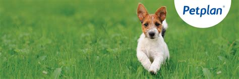 We may earn money or products from the companies mentioned in this post through our signing up for pet insurance is usually pretty simple, though you may have to complete a waiting period and the company may need to review your. Petplan Pet Insurance Review - Top5