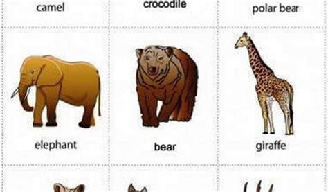 nama hewan  bahasa inggris  belajar bahasa inggris