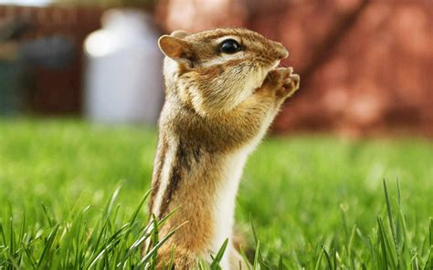 Baby Animals Hd Wallpapers - animal wallpapers for desktop wallpapersafari