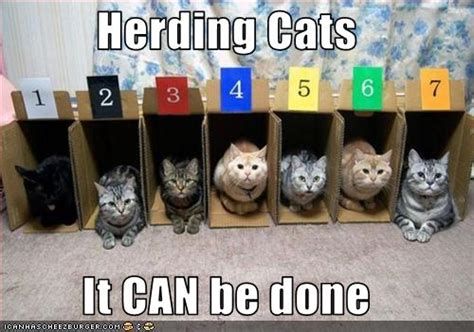 Herding Cats Meme - herding cats it can be done cheezburger funny memes funny pictures