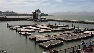 What happened to the sea lions on Pier 39? Colony of ...