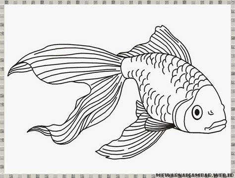 gambar mewarnai gambar ikan binatang laut diwarnai kolase