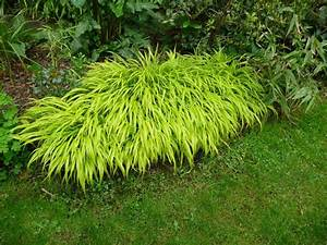 Rhizomsperre Selber Bauen : bambus online kaufen goldener peking bambus 1 pflanze g nstig online kaufen naturagart shop ~ Watch28wear.com Haus und Dekorationen