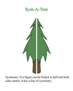 What Are Lines of Symmetry