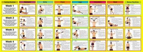 programme complet de musculation en salle 14 176 partie exercice de musculation avec le bullworker