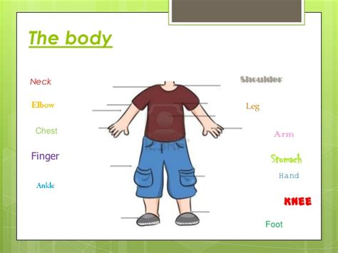 Body Parts (for Young Children