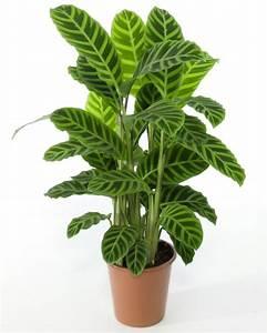 Büro Pflanzen Pflegeleicht : pflegeleichte zimmerpflanzen jeder raum verdient sch n auszusehen ~ Michelbontemps.com Haus und Dekorationen