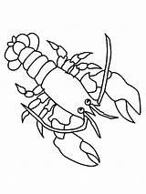 Colorear Marinos Coloring Lobster Langosta Animales Dibujos Dibujo Animal Drawings Fondos sketch template