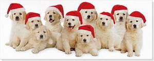 Golden Retriever Christmas Backgrounds 6 Desktop ...