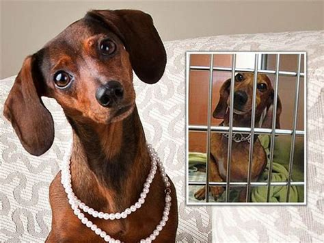 professional photos of animals to snag homes shelter pets get glam makeovers shelters