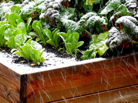 Winter Gardening Tricks, Tips And Secrets