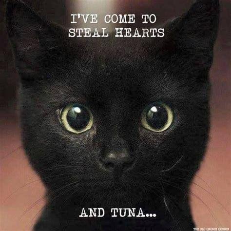 ive   steal hearts  tuna panfursrule