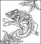 Coloring Twig Reptiles Disimpan Dari sketch template