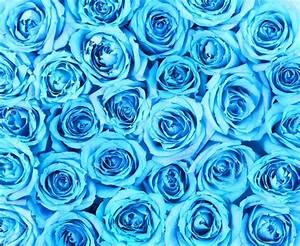 Turquoise roses background — Stock Photo © Guzel #43652695