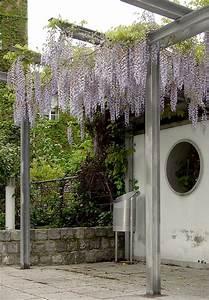 Pflanzen Für Pergola : pergola am haus selbst bauen und begr nen ~ Sanjose-hotels-ca.com Haus und Dekorationen