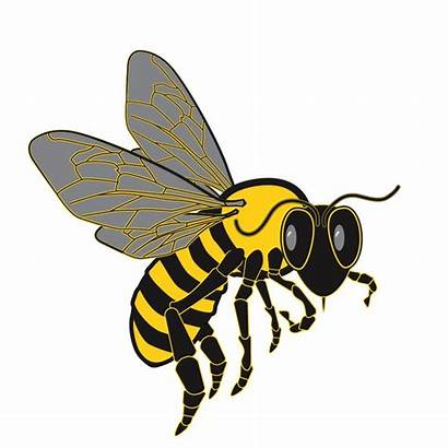 Bee Honeycomb Clip Clipart Bees Graphic Graphics
