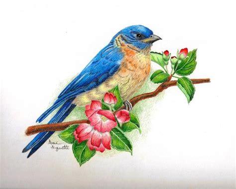bird colors poole colored pencil search coloured