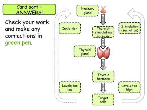 role  negative feedback  gcse biology