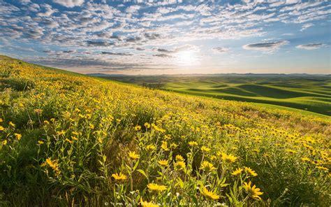sunrise field flowers washington eastern light golden yellow spring screen desktop hd wallpapers13 sky